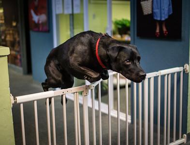 Winnie jumps the gate