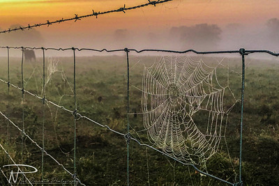 096 - Misty Morning Web