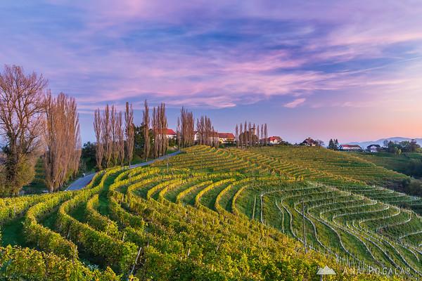Vineyards around Svetinje and Jeruzalem after sunset