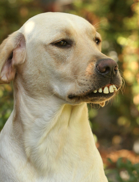 Our dog, Jedi.  Looks like we need to get him a new dentist.