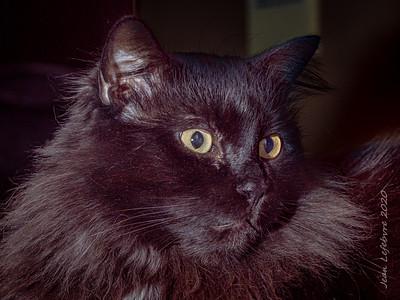 20200201-Cat_Gus-006