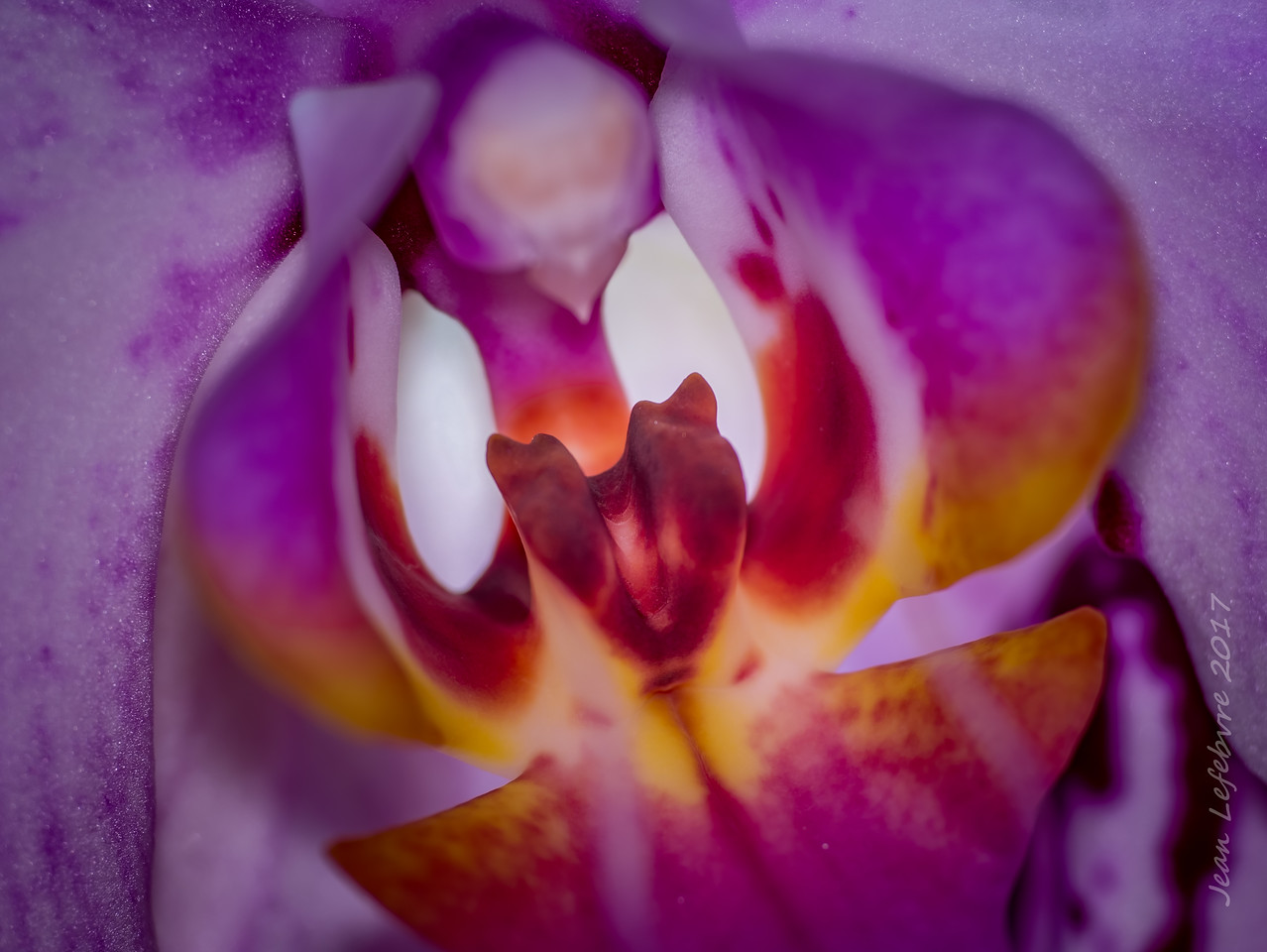 20171118-OrchidMacro-017of017-HDR