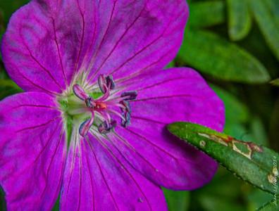 Flower_Test_(3_of_11)_140802_HDR