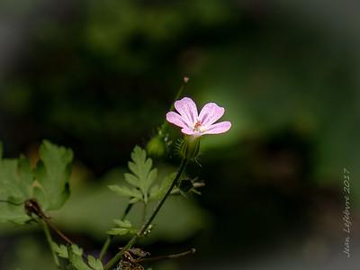 Tiny Flora