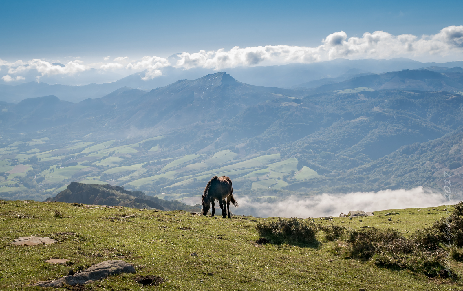 Wild horse in the Pyrennes Mountain's of Spain