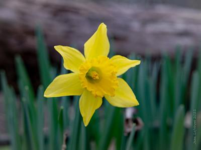 Spring has Sprung!