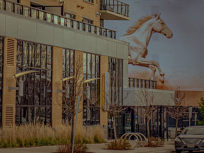 Texas Big Horses ...