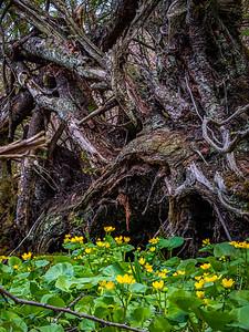 Tree Goes Roots Up! Flora Profits