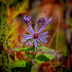 Dabble of Purple in the Fall