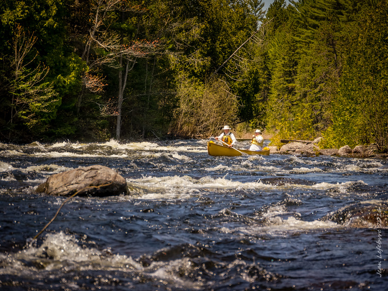 Fun paddle on the Opeongo River