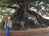 2105 BA joe cenntenial tree