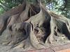 2105 BA CENTENNIAL TREE ROOTS
