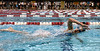 Bob Raines--Montgomery Media<br /> A contestant swims the last half length of the 10-lane circuit of the high school pool during the Upper Dublin Triathlon Sunday, May 17, 2015.