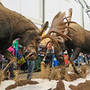 Moose Taxidermy