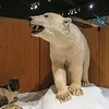 Museum of the North, Fairbanks, AK