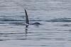 Orca approach