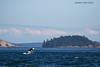 Orca scenic