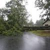 Double trunked red oak down on Hilltop Road in Billerica (same house with tree in backyard on roof).  (SUN/Julia Malakie)