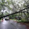 Red maple tree down on Elsie Ave in Billerica, near Braemore Road, in severe thunderstorm. (SUN/Julia Malakie)