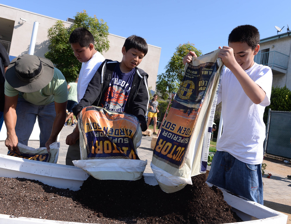 . Brandon Chavez, center, and Jeremiah Teaupa, right empty bags of potting soil into new planters at Bud Carson Middle School in Hawthorne Friday as gardens were built to grow vegetables and flowers. The Community Kitchen and TrueCar partnered with the school in the effort. (Fri., Sept 13, 2013 Photo by Brad Graverson/The Daily Breeze)