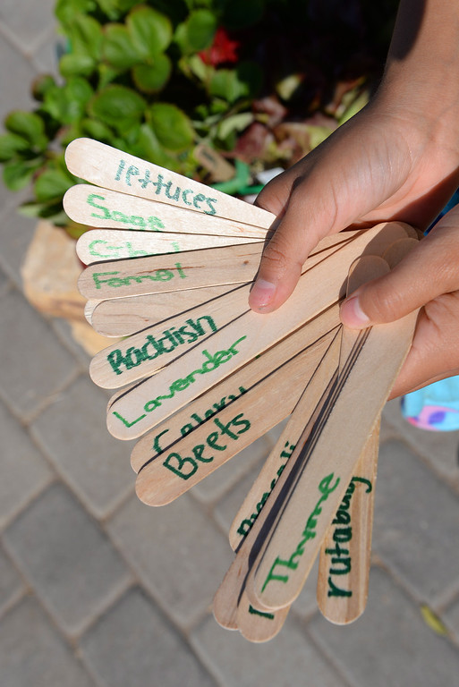 . Handmade garden labels at Bud Carson Middle School in Hawthorne Friday as gardens were built to grow vegetables and flowers. The Community Kitchen and TrueCar partnered with the school in the effort. (Fri., Sept 13, 2013 Photo by Brad Graverson/The Daily Breeze)