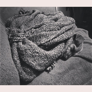 """The blanket shifted and, all of a sudden, a head appeared."" via Instagram http://instagram.com/p/fTTsNbNMdC/"