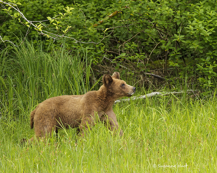 Little female cub got scent of her mother