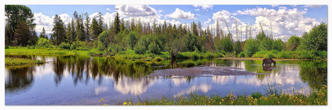 The Pond on Moose Wilson Road (with Moose)