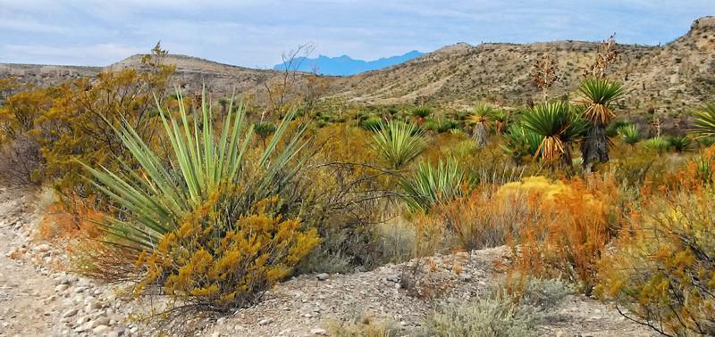 Chihuahan Desert