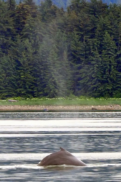 Whale watching - Juneau