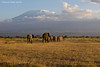 Elephants with  Mount Kilimanjaro.in the background.