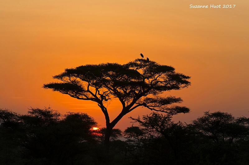 Sunrise on the plains of Ndutu.