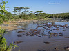 Hippo pool on the Mara river