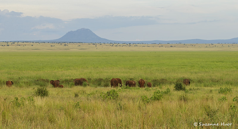 Elephant  scape  Tarangiri national park