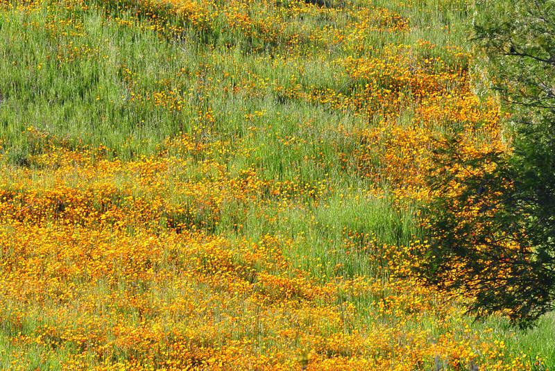 Hillside color - Mulholland Highway