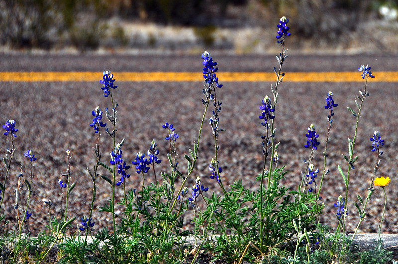 First signs of Spring in Texas