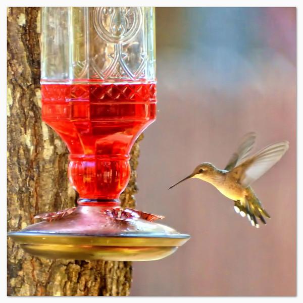 My first hummingbird