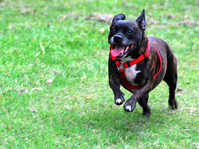 Roxie the Rocket Dog