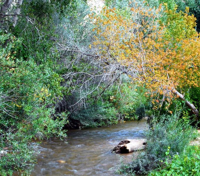 Mountain stream in the Sangre de Cristos