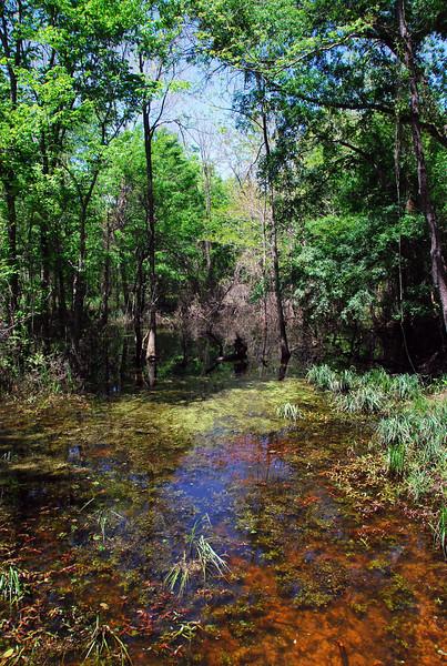 Sabine River wetlands in Mineola Nature Preserve