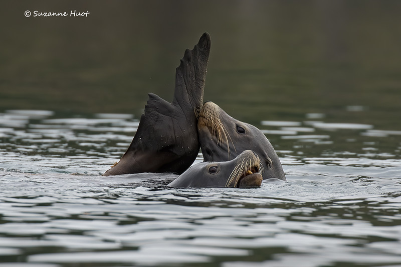 One rather itchy flipper