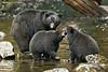 Playful cubs .