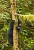 Cub descending tree.