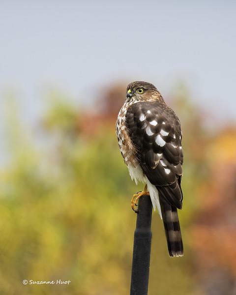 Guardian of the bird  feeder