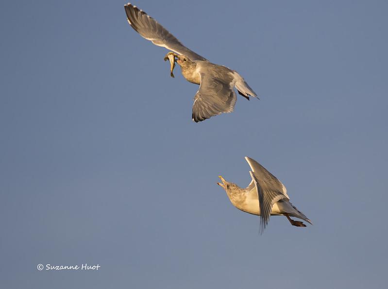 Aerial battle.