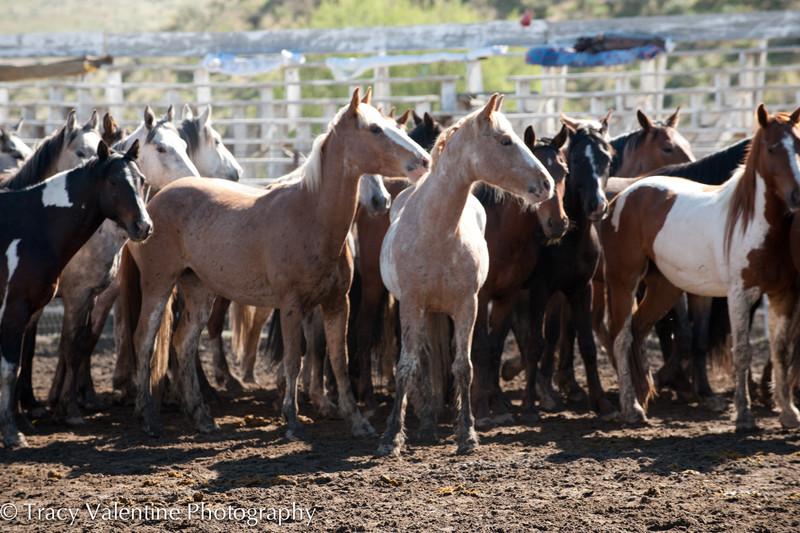 Jordan Valley Big Loop Rodeo