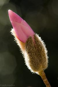 Spring Magnolia-aeamador-0088