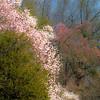Magnolia-aeamador-0037