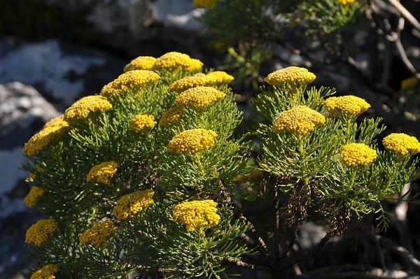 Plant-SA