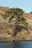 Loan Garry Oak tree